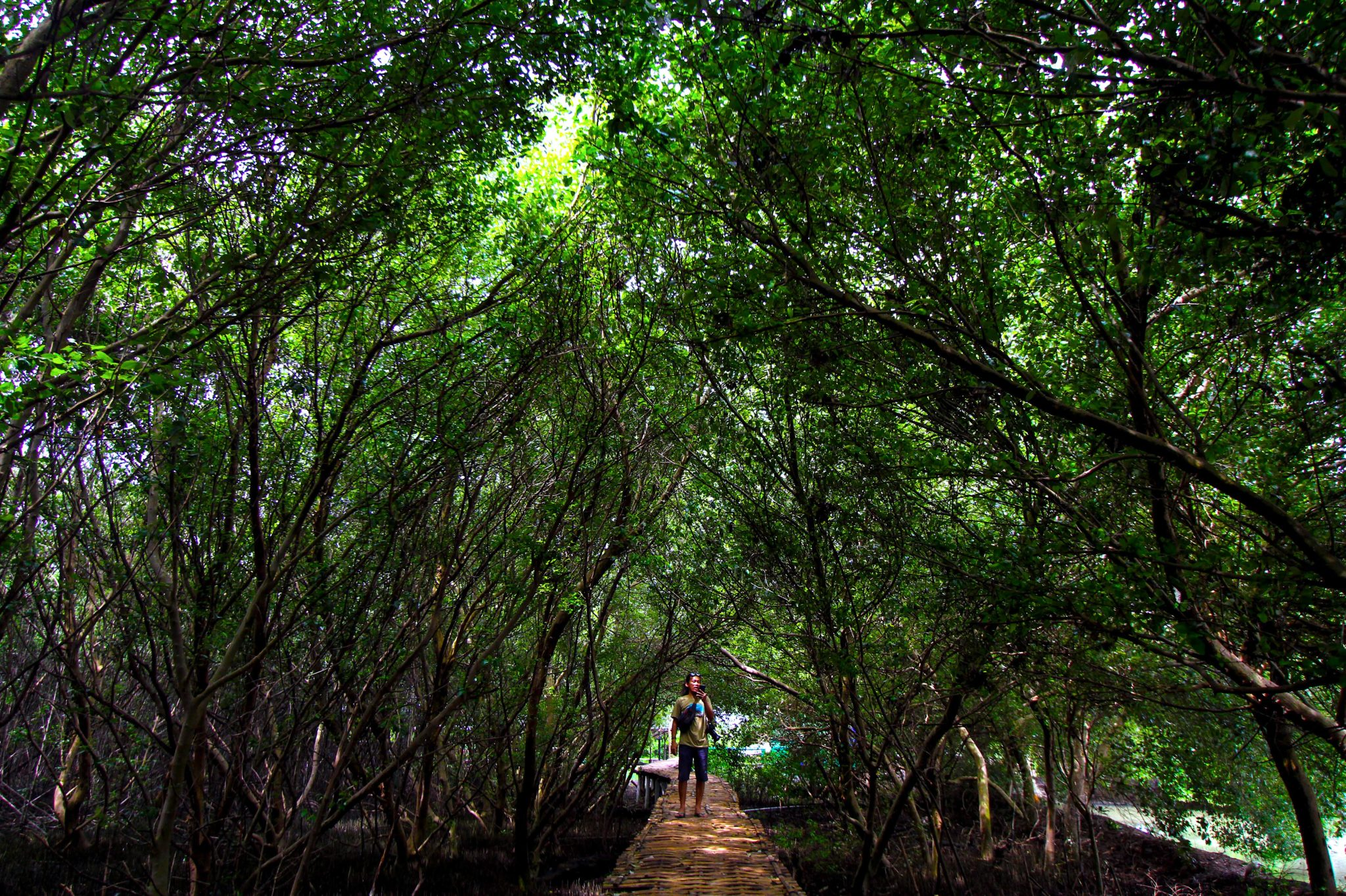Lebat teduhnya kawasan hutan mangrove Suasana kawasan mangrove di Desa Karangsong, Kecamatan Indramayu, Kabupaten Indramayu, Jawa Barat. Foto : Donny Iqbal/Mongabay Indonesia