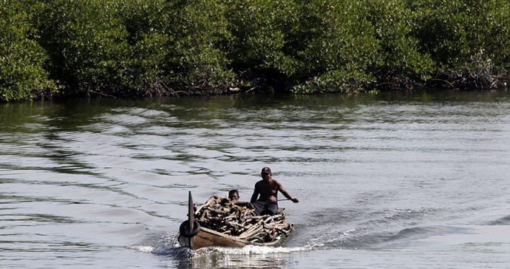 Laju Degradasi Hutan Mangrove tak Sebanding dengan Upaya Rehabilitasi