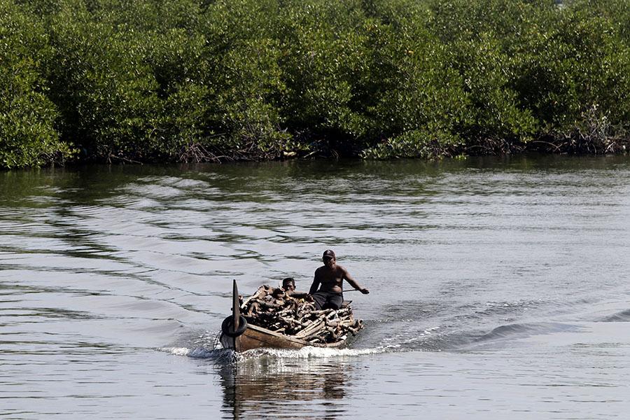 Penebangan liar mangrove di Langsa, Aceh Timur, dan Aceh Tamiang terjadi karena permintaan kayu bakau meningkat. Terutama dijadikan arang. Foto: Junaidi Hanafiah/Mongabay Indonesia
