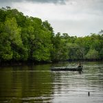 Mangrove di Bangka Belitung, Antara Pelestarian dan Ancaman Pembukaan Tambak