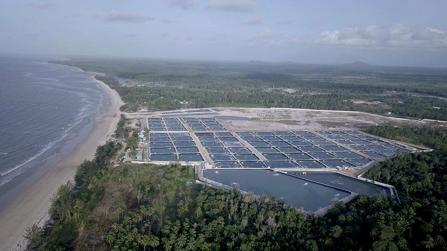 Kawasan tambang udang berada disekitar pesisir pantai di Desa Rambat, Kabupaten Bangka Barat. Setelah timah, tambak udang ikut mengancam kelestarian ekosistem mangrove di Pulau Bangka. Foto: Nopri Ismi/Mongabay Indonesia