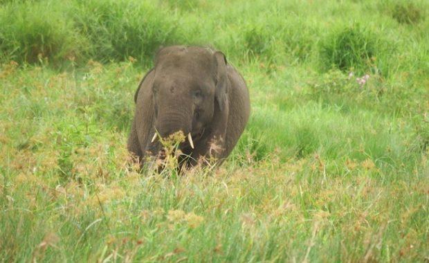 Karhutla Nyaris Usik Habitat 50 Gajah di Suaka Margasatwa Padang Sugihan