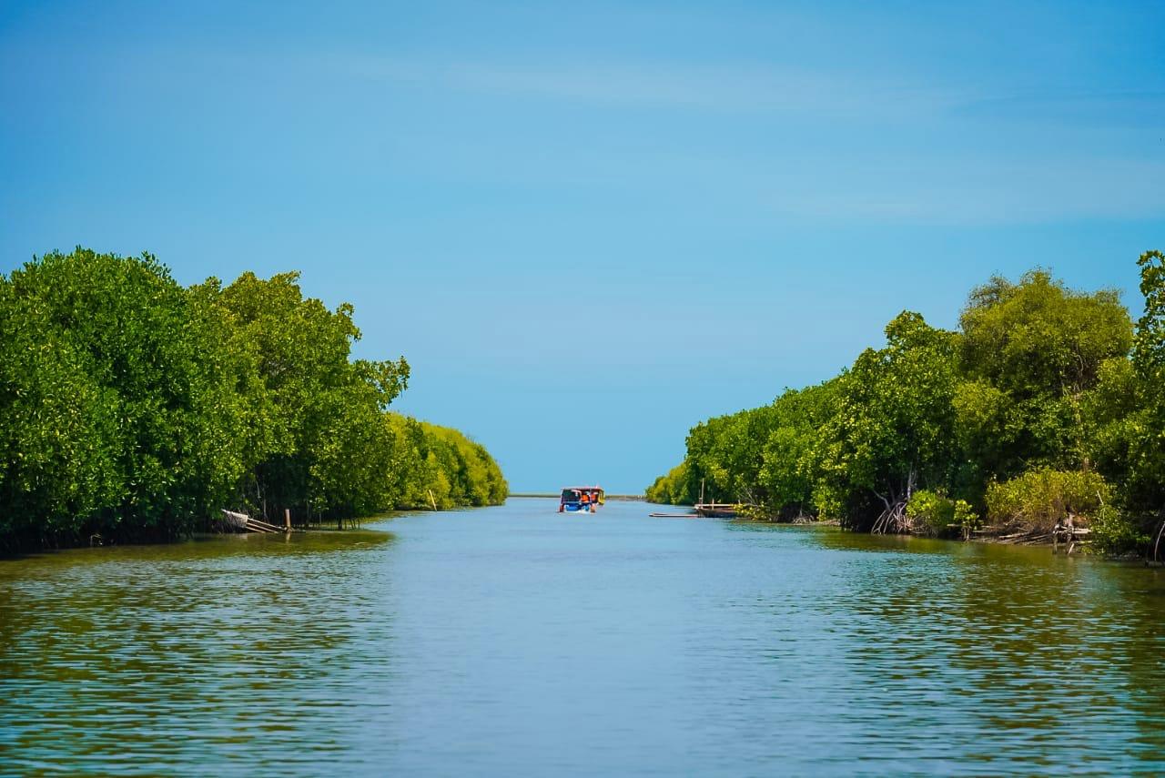 Kawasan mangrove di Kecamatan Wanasari, Kabupaten Brebes, Jateng. Foto : KLHK