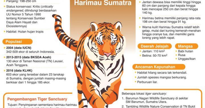 Mengenal Harimau Sumatra