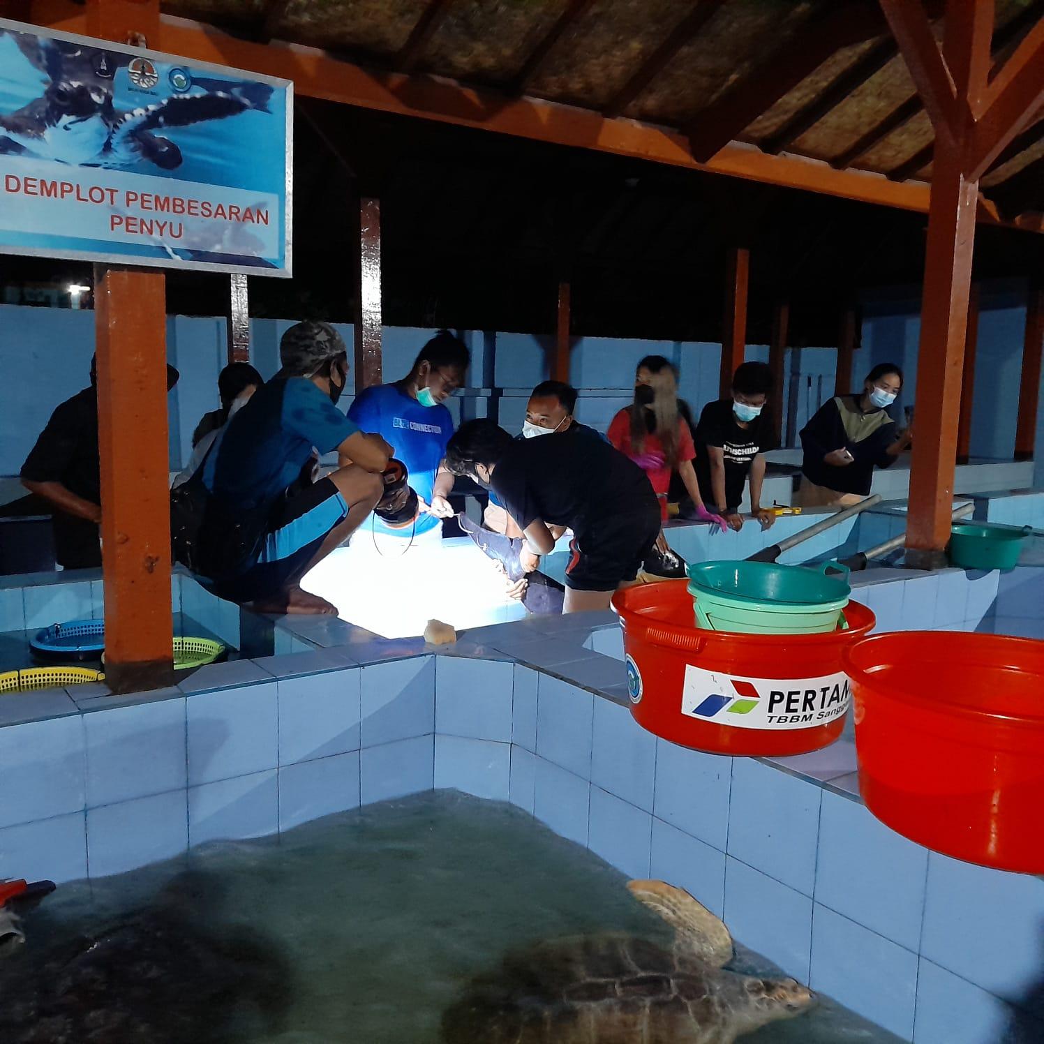 Tim Flying Vet sedang memantau seekor paus pygmy yang dievakuasi dari pantai dekat Dermaga Tanah Ampo, Desa Antiga, Kabupaten Karangasem, ke TCEC Serangan, Denpasar, Bali, Minggu (8/8/2021). Foto : Tim Flying Vet/TCEC Bali