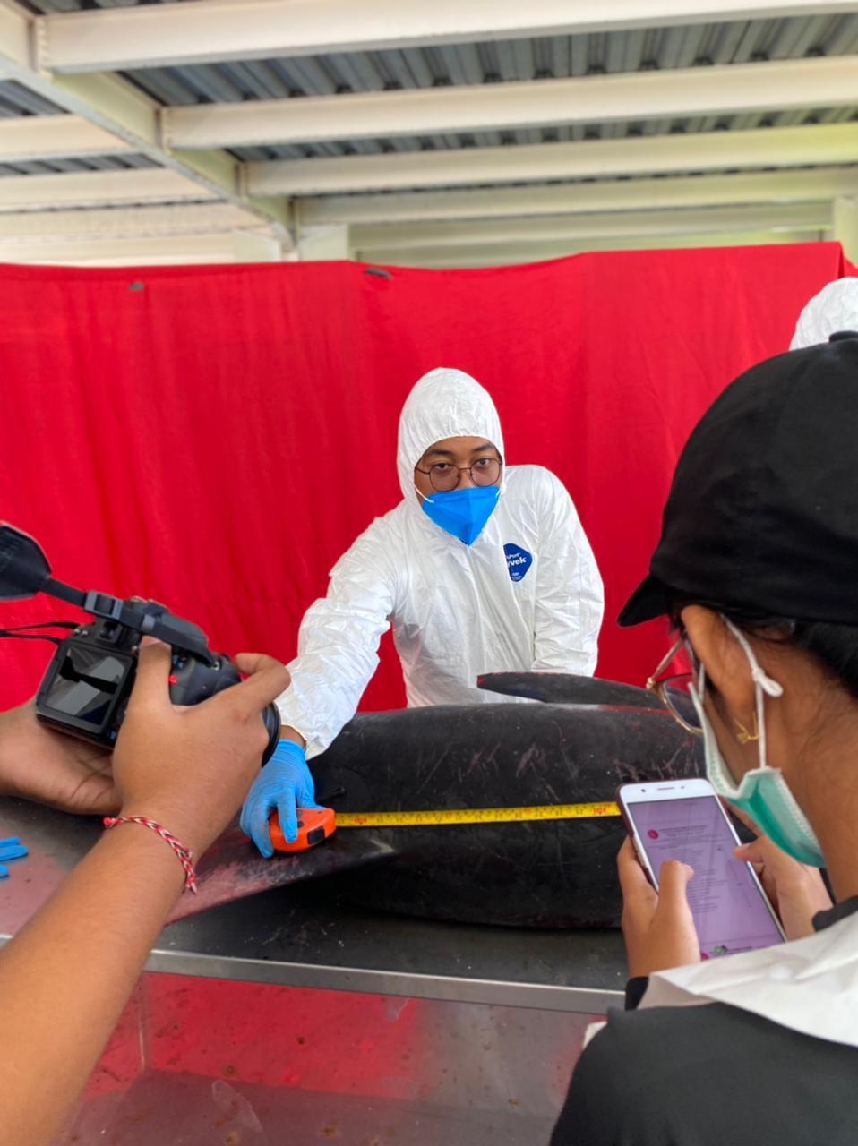 Tim Flying Vet melakukan nekropsi seekor paus pygmy yang dievakuasi dari pantai dekat Dermaga Tanah Ampo, Desa Antiga, Kabupaten Karangasem, ke TCEC Serangan, Denpasar, Bali, Minggu (8/8/2021). Foto : Tim Flying Vet/TCEC Bali.