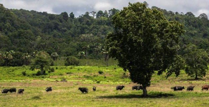 Konservasi Alam, Memupuk Kecintaan pada Alam dan Budaya Nusantara