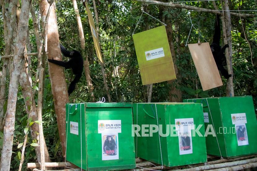 Hari Konservasi Alam Nasional momentum untuk melestarikan alam dan satwa. Ilustrasi konservasi alam  Foto: Antara/Nova Wahyudi