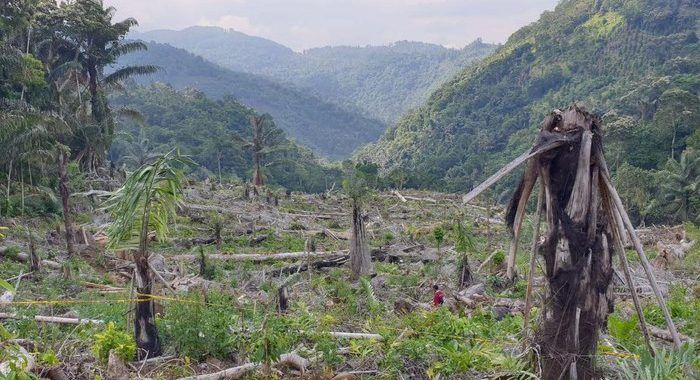 Riwayat Hutan Lindung 7 Hektare Berakhir Sebab Dibabat Wakil Rakyat