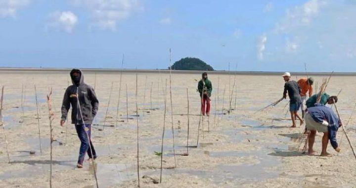 Rehabilitasi Mangrove Jadi Penyelamat Warga Kala Pandemi