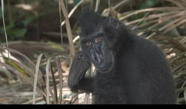 Laporan IUCN 2021, Indonesia Punya 189 Fauna Kritis Terancam Punah, 26 Spesies Adalah Mamalia
