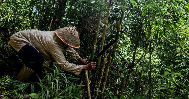 Cerita Para Perempuan Penjaga Hutan