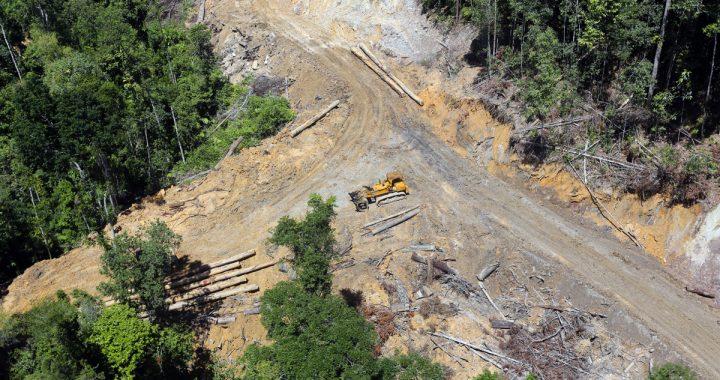 Jalan Raya Belah 'Heart of Borneo' Mengkhawatirkan