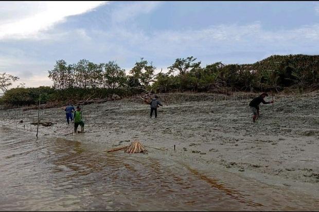Maraknya penebangan liar yang terjadi di tahun 1980-an membuat ekosistem mangrove rusak, (Ist)
